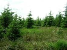 Misiune Alser Forest